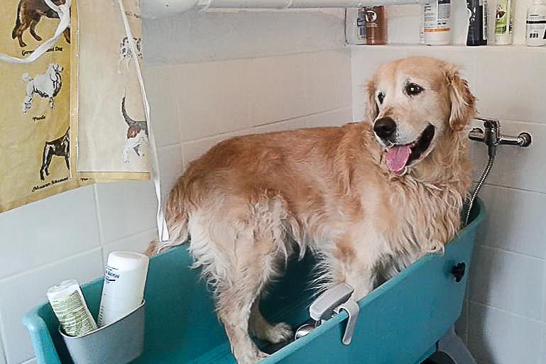 Kąpiel psa - usługa SPA dla pupila w hotelu dla psów Animal Inn
