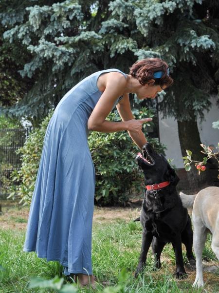 szkolenie labradorów w Animal Inn