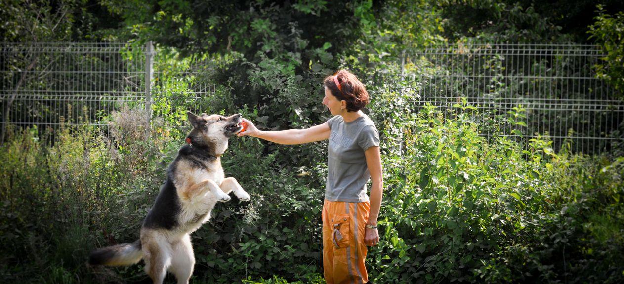 Aktywny wypoczynek Twojego psa